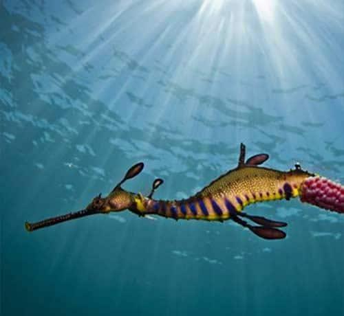 Port Phillip Bay Snorkelling | Carmel at Sorrento